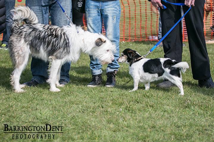 fun dog show 10