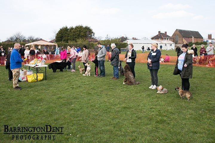 fun dog show 17