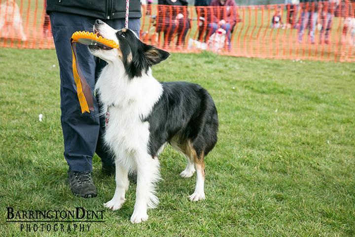 fun dog show 2